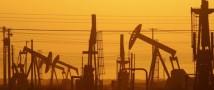 Падение нефти, обвал рубля — «черный понедельник»