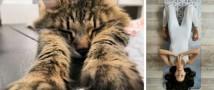 Школа кошачьей грации открывается в Республике кошек уже сегодня