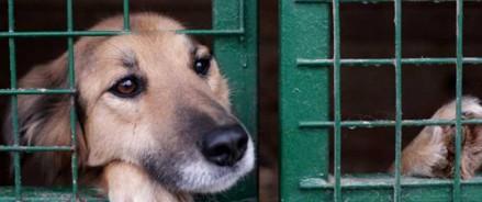 Приют для животных будет построен на севере Москвы
