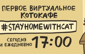 Виртуальное котокафе им. кота Шредингера подготовило онлайн программу