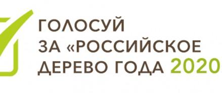 Выбираем Главное дерево страны. Конкурс «Российское дерево года 2020»
