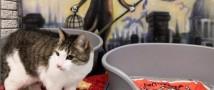 Республика котов получила Анонимку