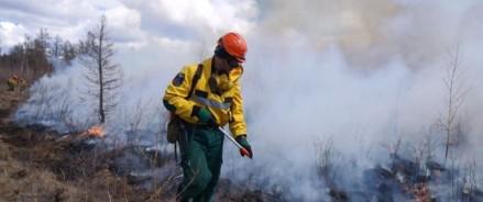 За неделю с 4 по 10 мая лесопожарные службы ликвидировали в 39 регионах Российской Федерации