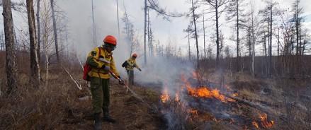 За неделю в 36 регионах России потушено 407 лесных пожаров