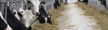Аграрии одного из районов Татарстана установили рекорд по суточному производству молока