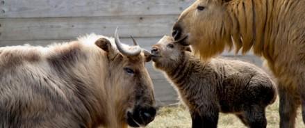 Открытие Центра воспроизводства редких животных Московского зоопарка