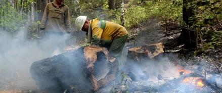 За неделю с 15 по 21 июня лесопожарные службы ликвидировали в 49 регионах Российской Федерации