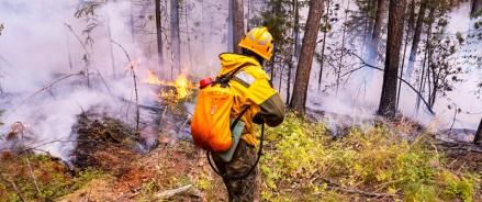 За неделю с 8 по 14 июня лесопожарные ликвидировали на территории РФ 276 лесных пожаров
