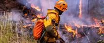 За неделю в 37 регионах России потушено 366 лесных пожаров