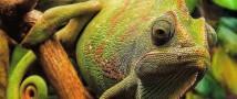 Тропические оранжереи «Аптекарского огорода» откроют 1 июля