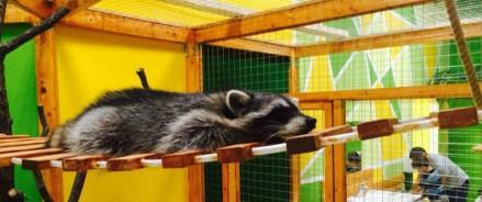 В Сахалинском зоопарке для енотов построят новый вольер