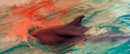 «Зелёная Альтернатива» выступает за закрытие дельфинариев в России