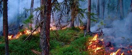 Авиалесоохраны ликвидировали 430 лесных пожаров в Томской области, на Урале и в регионах Дальнего Востока