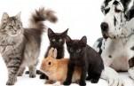 Авито Услуги: в сезон летних путешествий в Санкт-Петербурге вырос спрос на передержку домашних животных