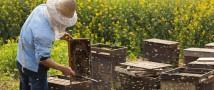 О развитии пчеловодства в России