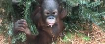 #ИЩУМАТИКУ  — орангу — квест в Московском зоопарке