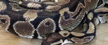В Московском зоопарке родились редкие змеи