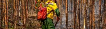 В России потушено 365 лесных пожаров, сегодня идет тушение 115 пожаров, полностью остановлено распространение огня 40 пожаров