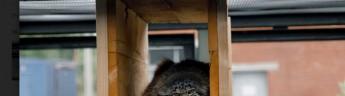 В Московском зоопарке снова можно увидеть манула