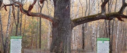 Последняя неделя конкурса «Российское дерево года — 2020»