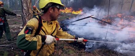 За неделю в 30 регионах России, в том числе в ЦФО, потушен 81 лесной пожар