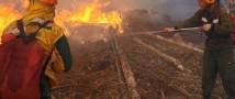 За неделю в 37 регионах России потушено 187 лесных пожаров