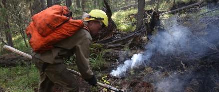 За неделю в 39 регионах России, в том числе ЦФО, потушено 132 лесных пожара на площади более 6 тысяч га.