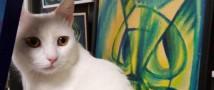 Ночь искусств 2020 с котиками: хвост виляет кошкой!