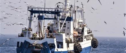 Рыболовный флот России пополнится двумя научно-исследовательскими судами