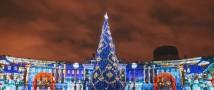 Елку для Дворцовой площади выберут на сайте «Петербургского дневника»