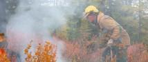 За неделю, с 19 по 25 октября, лесопожарные силы и привлеченные лица ликвидировали 95 лесных пожаров в 28 регионах России