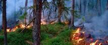За неделю в 31 регионе России потушен 281 лесной пожар