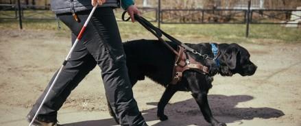 Активисты ОНФ помогли незрячему москвичу получить компенсацию за содержание собаки-поводыря