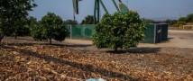 Новые ограничения из-за коронавируса привели к падению цен на нефть