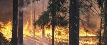 За неделю в 4 регионах России потушен 21 лесной пожар