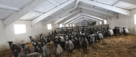 Фермеры Татарстана получили грантына159 млн рублей