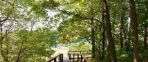 Ландшафтный заказник «Долина реки Сходни» в Куркино украсят новые липы