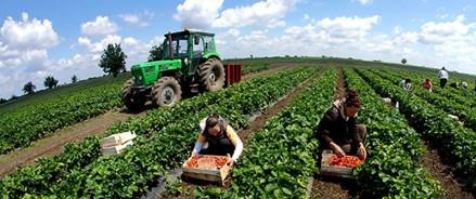 ProPersonnel: Пять профессий в сельском хозяйстве, которые скоро исчезнут