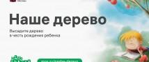 Проект «Наше дерево» поддерживают популярные блогеры