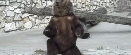 В Московском зоопарке медведи впали в спячку