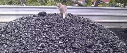 В Ростовской области шахтерам-пенсионерам раздадут 30 тысяч тонн угля