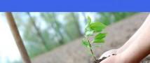 """Весной 2021 года в Москве продолжится высадка деревьев по программе """"Наше дерево"""""""