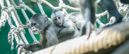 Режим работы Московского зоопарка в праздничные дни