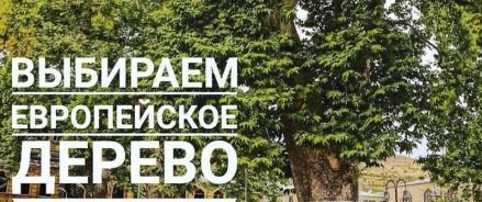 Голосуем за российский платан на международном конкурсе