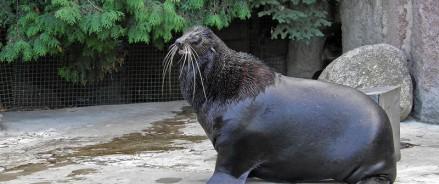Как обитатели Московского зоопарка реагируют на потепление