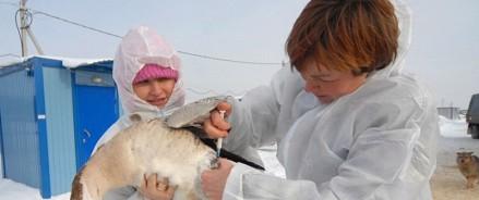 В шести регионах России пройдет вакцинация против птичьего гриппа