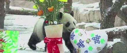 Обитатели Московского зоопарка отметили 8 марта