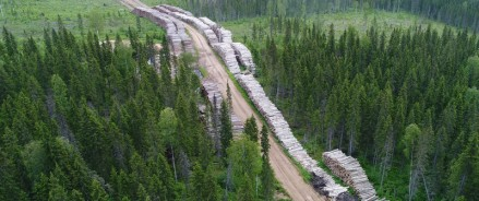 В Архангельской области сохранят от рубок 600 тысяч гектар леса