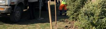 В городском парке Бердска посадят больше 2 тысяч деревьев