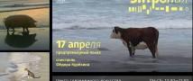 «Энтропия» Фёдора Курёхина • 17.04 • Предпремьерный показ